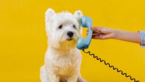 Dia mundial dos animais: como está o SAC das empresas de pet?